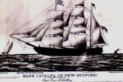 Catalpa